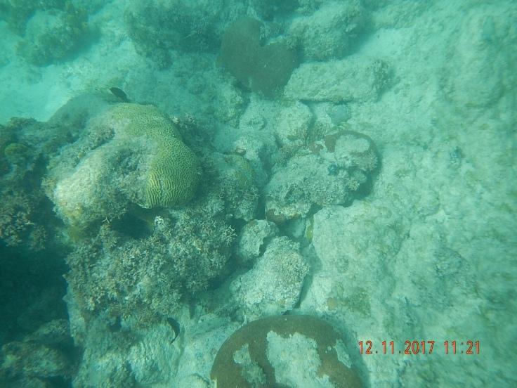 Boca Catalina Snorkel